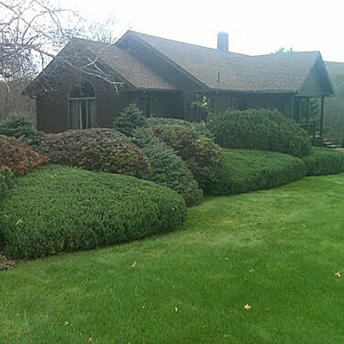 Lawn mowing, hedge trimming, and lawn fertilization.